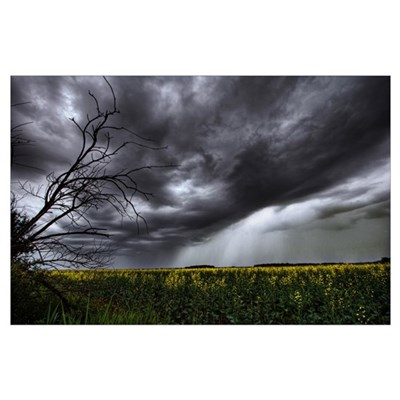 Rain And Thunderstorm Over A Canola Field South Of Poster
