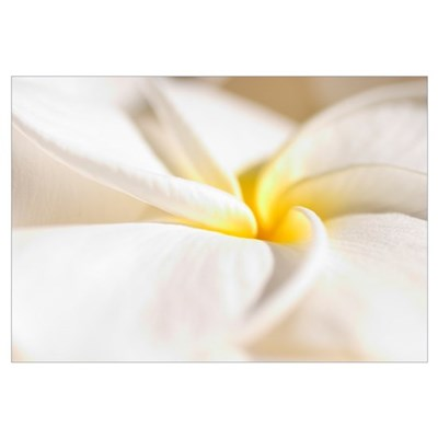 Extreme Close-Up Of White And Yellow Plumeria Flow Canvas Art