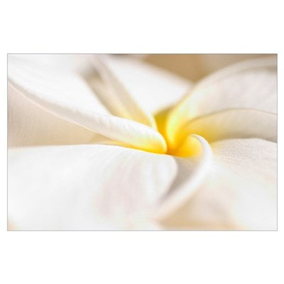 Extreme Close-Up Of White And Yellow Plumeria Flow Poster