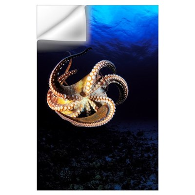 Hawaii, Day Octopus (Octopus Cyanea), View Of Curl Wall Decal