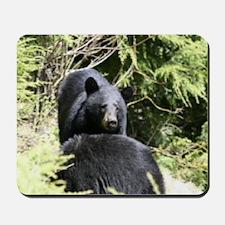 two black bears Mousepad