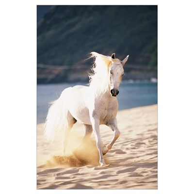 White Horse Running On The Beach Poster
