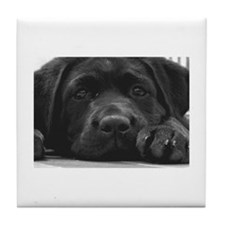 Cute Pet labrador retriever Tile Coaster