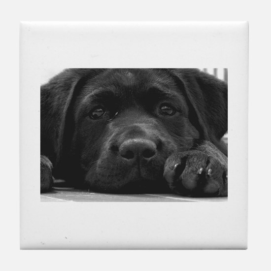 Cute Pet Tile Coaster