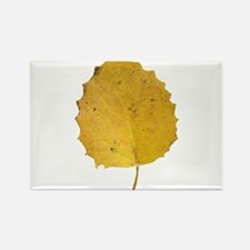 Golden Aspen Leaf Rectangle Magnet