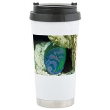 Lunare or crescent wrasse Travel Mug