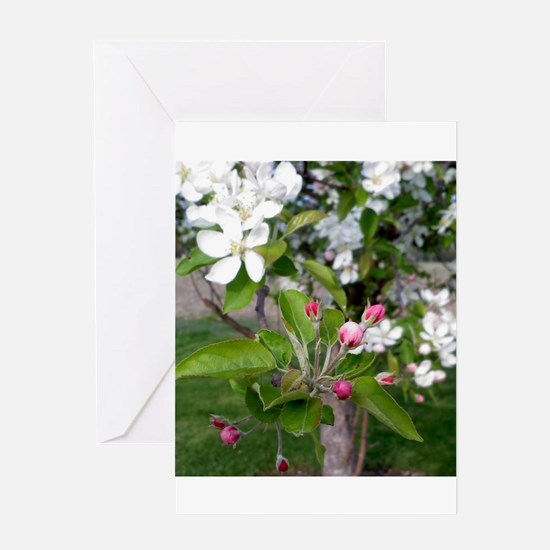 Unique Apple blossoms Greeting Card