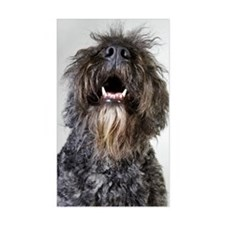 Bouvier des Flandres (canis fa Decal