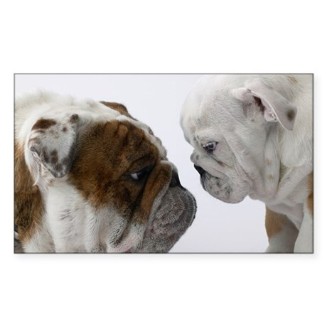 Two English Bulldogs face to f Sticker (Rectangle)