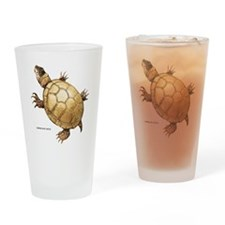 Common Mud Turtle Drinking Glass
