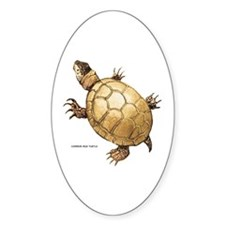 Common Mud Turtle Decal