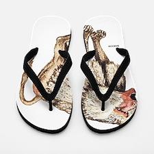 Baboon Ape Monkey Flip Flops