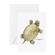 Northern Diamondback Turtle Greeting Card