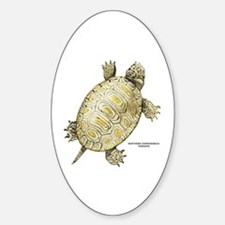 Northern Diamondback Turtle Decal