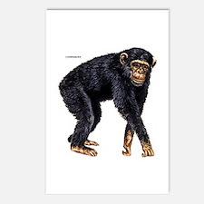 Chimpanzee Monkey Ape Postcards (Package of 8)