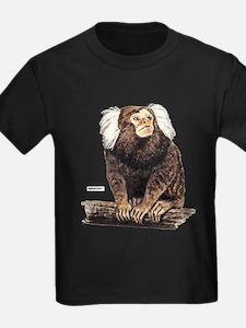 Marmoset Monkey T