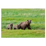 Bears in alaska Wrapped Canvas Art