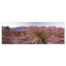 Yucca plant in a desert, Red Rock Canyon, Las Vega Poster