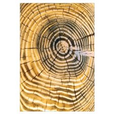 Age Rings of Tree Trunk