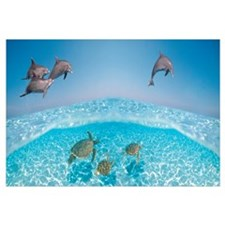 Bottlenose Dolphin Jumping While Turtles Swimming