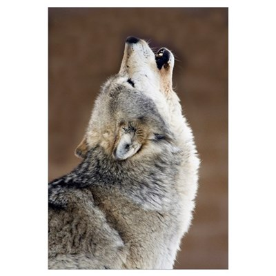 Gray Wolf Howling Canvas Art
