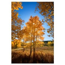 Colorado, Buffalo Pass, Sun Shining Through Fall-C Framed Print