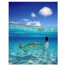 French Polynesia, Tahiti, Bora Bora, Stingray In B Poster