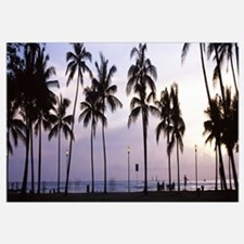 Palm trees on the beach, Waikiki, Honolulu, Oahu,