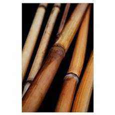 Japan, Bamboo On Black Background Poster