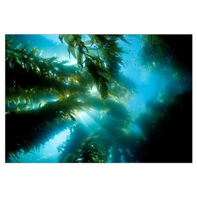 California, Catalina Island, Sunlight Streaming Th Framed Print