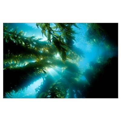 California, Catalina Island, Sunlight Streaming Th Poster
