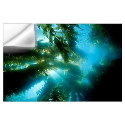 California, Catalina Island, Sunlight Streaming Th Wall Decal