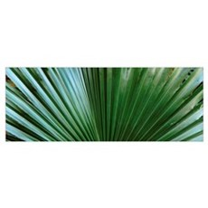 Close-up of palm leaves Poster