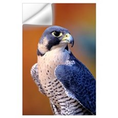 Closeup Of An Adult Male Peregrine Falcon Wall Decal