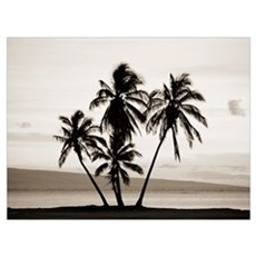 Hawaii, Molokai, Silhouetted Palms Against Sunset, Poster