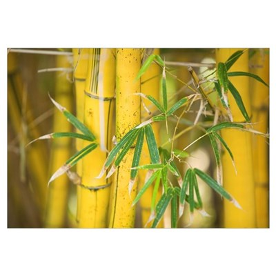 Close-Up Of Bamboo Stalks And Leaves Framed Print