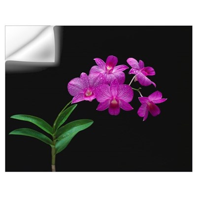 Purple Vanda Orchids Wall Decal