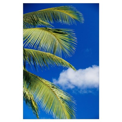 Coconut Palm Trees And Blue Sky Poster