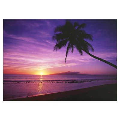 Hawaii, Maui, Olowalu, Palm Tree Silhouette At Sun Poster