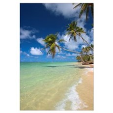 Hawaii, Palm Trees Leaning Over Beach Canvas Art