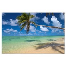 Lone Palm Tree Leaning Over Beach With Shadow Poster