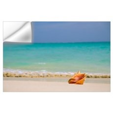 Conch Shell Along Shoreline, Turquoise Ocean In Ba Wall Decal