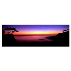 Silhouette of Lone Cypress Tree, Pebble Beach, Car Poster