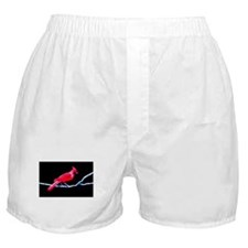 Red Cardinal on Branch Boxer Shorts