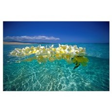 Plumeria Lei Floating On Ocean Surface Poster