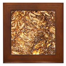 Maggot Framed Tile