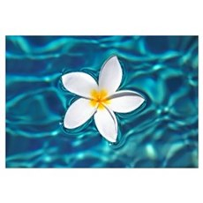 Plumeria Flower Floating In Clear Blue Water Canvas Art