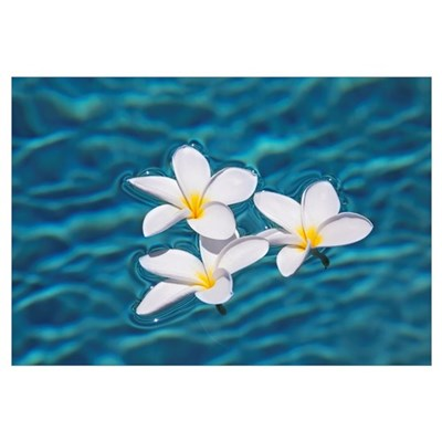 Plumeria Flowers Floating In Clear Blue Water Canvas Art