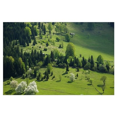 Trees in a field, Kosovo Frontier, Dacici Village, Poster