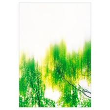 Treetop, Defocused